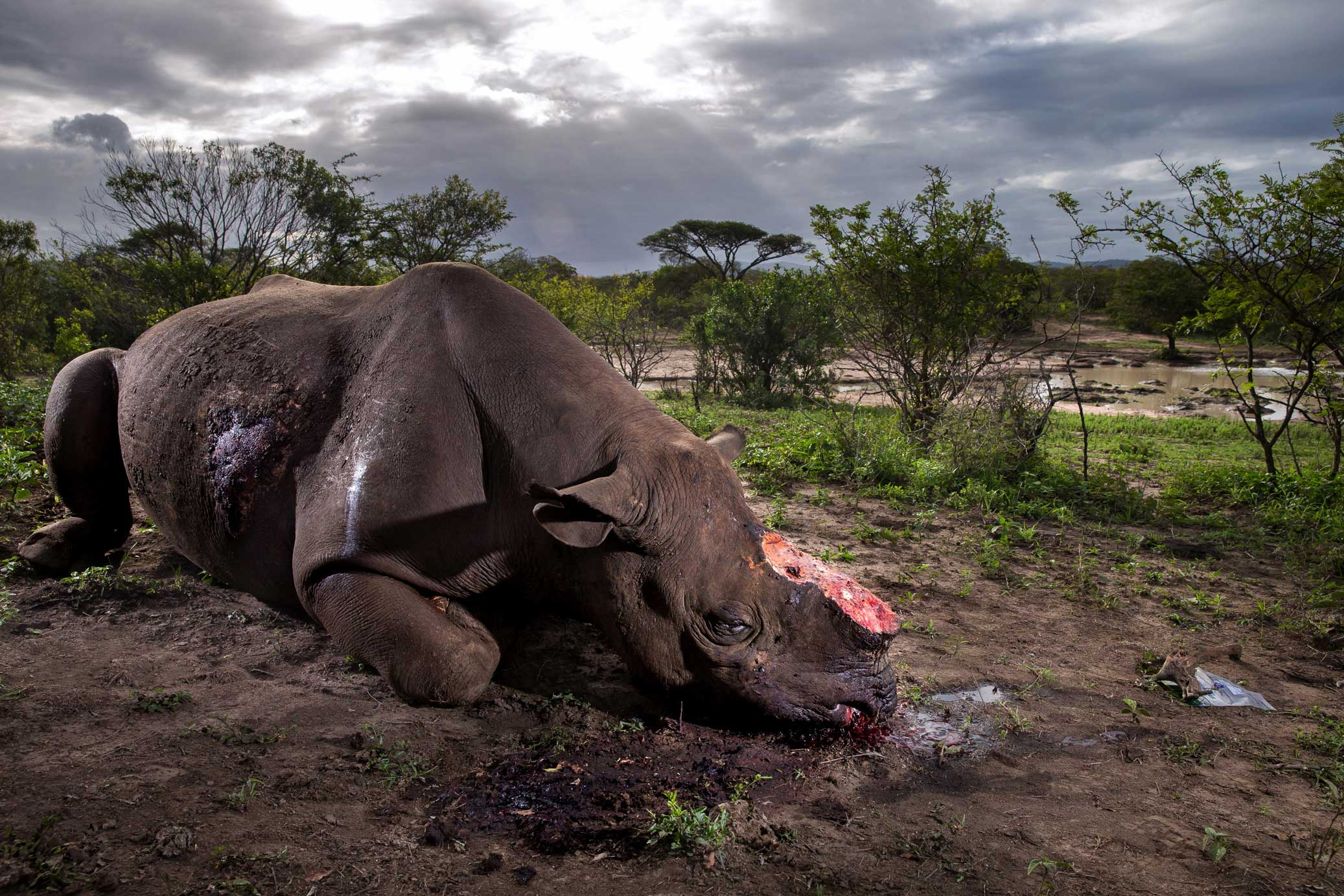 Credit: Brent Stirton, Getty Images for National Geographic Magazine